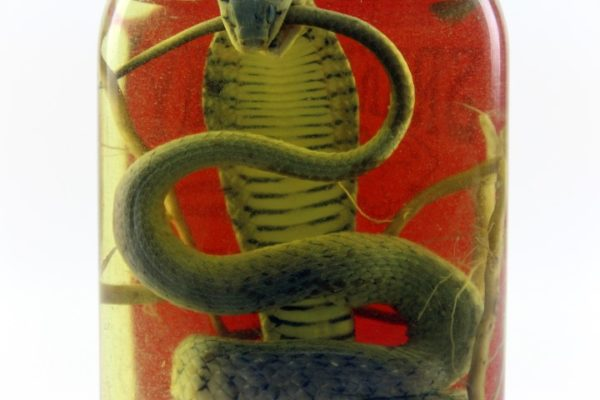 Vin de Serpent Snake Wine Authentique du Vietnam