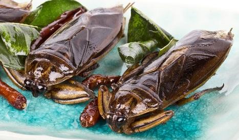 Quels insectes manger en tha lande asian snake - Que mange les punaises ...